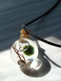 Live Marimo Moss Ball Orb with Pearl Mini Terrarium Necklace /Mothers Day.