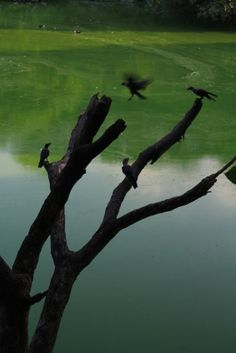 Hauz Khas Lake, Delhi