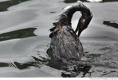 victim of an oil spill