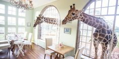 Giraffe Manor Is the Surreal Vacation Spot of Your Dreams  - HouseBeautiful.com