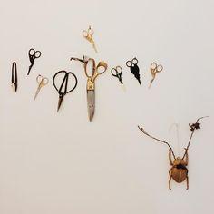 Curious and Coe Scissors, Collections, Random, Home Decor, Decoration Home, Room Decor, Bicycle Kick, Home Interior Design, Casual