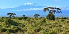 Amboseli Nationalpark Kenia © Shutterstock.com