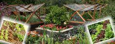 Növénytársítás az öngyógyító veteményesben Horticulture, Vegetable Garden, Terrarium, Vegetables, Plants, Decor, Terrariums, Decoration, Garden Planning