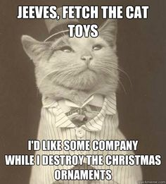 Jeeves, fetch the cat toys I'd like some company  while I destroy the christmas ornaments   Aristocat