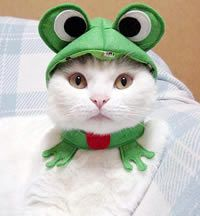 Frog cat - Still have the shirt Chepe made for me ages ago with this image. And still LOVE it.