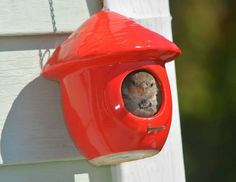 Two might be a crowd in the tiny decorative birdhouse hanging in Sharon Butts' yard. The little guy shows up every day, and doesn't seem any the lonely.