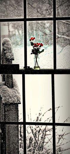 window.jpg (293×640)