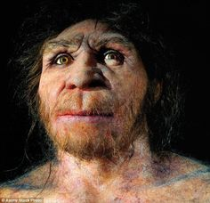 The population of last common ancestors was probably part of the species Homo heidelbergensis (artist impression pictured) in its broadest sense Human Family Tree, Homo Heidelbergensis, Forensic Facial Reconstruction, Forensic Artist, Human Fossils, Human Teeth, Primitive Survival, Early Humans, Human Evolution