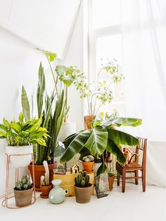 Here's Why You Can't Keep Your Plants Alive via @MyDomaine