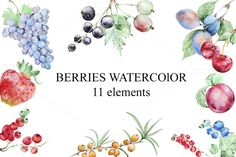 Set of watercolor berries by IvanFet on @creativemarket