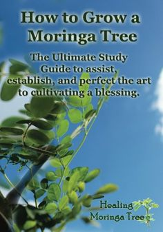 How to grow a Moringa Tree: The Ultimate Study Guide to assist, establish, and perfect the art to cultivating a blessing. by Cornelius Epps II,http://www.amazon.com/dp/149485144X/ref=cm_sw_r_pi_dp_m.UYsb1EHYQVPAZJ