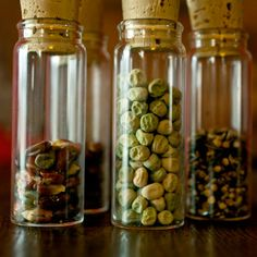 "Vegetable Seed Saving Simplified.  Who knew that ""fermenting"" the seeds improved germination?!!"