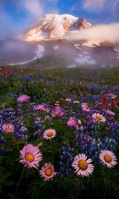 Lifting the Veil.. Mount Rainier, Washington, U.S (by Michael Bollino on Flickr)