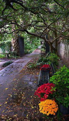 Walkway and Bench, Charleston, South Carolina (10899)