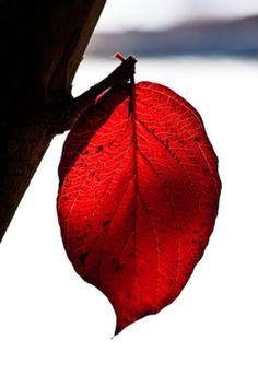 raspberrytart:  Rubicund of Visage (by Prestidigitizer)