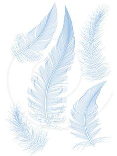 Blue bird feathers