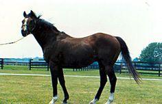 1964 KentucKy Derby Winner, Northern Dancer
