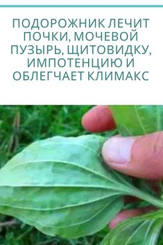 Health Remedies, Plant Leaves, Knowledge, Health Fitness, Plants, Consciousness, Health And Wellness, Planters, Plant