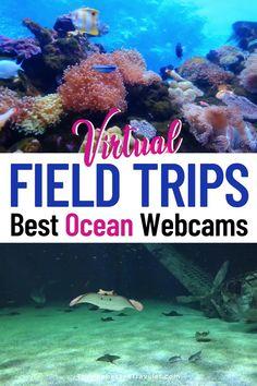 Virtual Field Trip: Aquarium Live Feeds & Ocean Webcams   Virtual Field Trips for Students