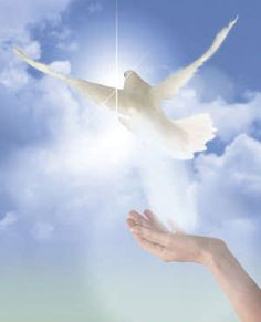 Doves aren't just symbols of love but of peace and serenity and Jesus! Religion Catolica, Saint Esprit, Angels Among Us, White Doves, Guardian Angels, Holy Spirit, Celestial, Christianity, Serenity