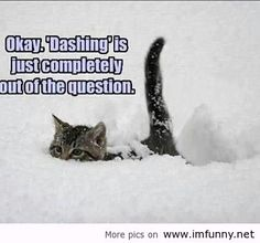 I hate this snow! | Funny Pictures, Funny Quotes – Photos, Quotes, Images, Pics