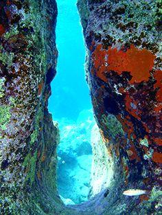 VISIT GREECE  Dive into the colourful biodiversity of the #Cretan sea. #Crete #summer #destination #visitgreece #nature #seabed #diving