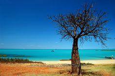 Boab Tree, Town Beach, Broome - www.tracyryanphotography.com