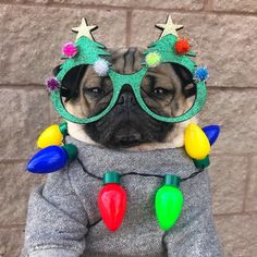 """""""When everyone tells me I need to get more in the Christmas spirit"""" -Doug the Pug Pug Meme, Cute Pugs, Cute Funny Animals, Silly Dogs, Funny Dogs, Wallpaper Pug, Doug The Pug, Baby Pugs, Funny Pugs"""