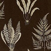 Behang: A Painters Garden, Woodland ferns charcoal Sanderson