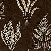 Behang: A Painters Garden, Woodland ferns charcoal Sanderson
