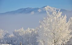 Hoar Frost, Snow White, Winter Landscape, Frost, Frozen