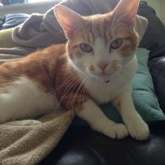 trop sympa le chat en photo 171 sur http://ift.tt/1oohFRS