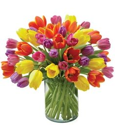 tulips, tulips, tulips flowers
