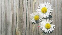 Trocha fotografického 'umenia' na nedeľu. 🌻😁🌻 #peknunedelumajte #kvety…