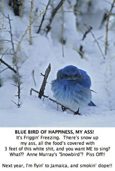 LMAO!!  One pissed off birdy
