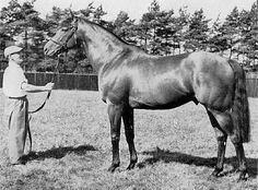 St. Paddy(1957)Auerole- Edie Kelly By Bois Roussel. 4x5x5 To Chaucer, 5x5 To St. Simon. 14 Starts 9 Wins 2 Seconds 2 Thirds. $380,000 Est. Won 1960 Epsom Derby(Eng-1), St. Leger(Eng-1), Eclipse S(Eng-1), Great Voltigeur S(Eng-2), 2nd King George VI & Queen Elizabeth S(Eng-1), Champion S(Eng-1). Died In 1984.
