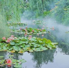Water and wetland plants Nature Aesthetic, White Aesthetic, Aesthetic Photo, Koi Art, Monet Paintings, Pond Life, Fantasy Inspiration, Watercolor Techniques, Claude Monet