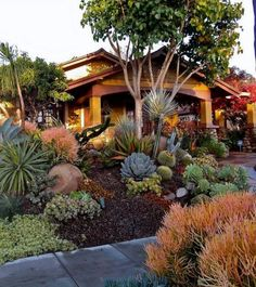 Fabulous Xeriscape Front Yard Design Ideas and Pictures 29 - Awesome Indoor & Outdoor Drought Resistant Landscaping, Low Water Landscaping, Drought Tolerant Garden, Succulent Landscaping, Front Yard Landscaping, Succulents Garden, Backyard Landscaping, Landscaping Ideas, Landscaping Software