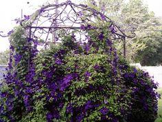 Gazebo Patio Gazebo, Pergola, Backyard, Shade Canopy, Outdoor Retreat, Decks And Porches, Screened In Porch, Garden Gates, Sheds