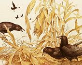 Vintage Farmhouse Home Decor, Harvest Crows in an Autumn Corn Field, Bird Print