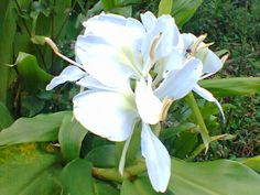 artes  enfeites e fotografias: flor simples mas eh muito linda