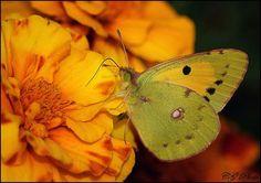Beautiful Colors...