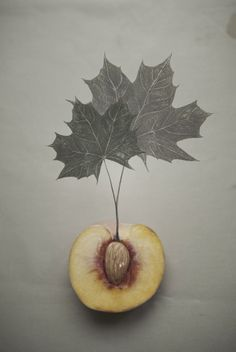 peach tree art // KATHREINERLE