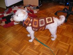 dog baby sweaters patterns - Buscar con Google