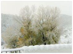 Nuestros chopos Nevada, Snow, Outdoor, Outdoors, Outdoor Games, Outdoor Life, Human Eye