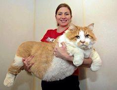 big fat cat                                                                                                                                                                                 More