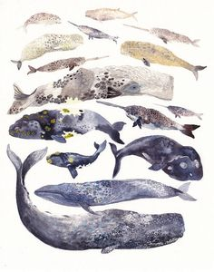 Whale Collection  16 x 20  Archival Print by unitedthread on Etsy,