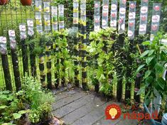Plastic bottle vertical garden is a great way to reuse the throwaway bottles, grow plants in limited space and also conserve the water. With simple steps, a few plastic bottles and our ideas below, you can easily create a trendy vertical garden. Vertical Vegetable Gardens, Vertical Garden Diy, Vegetable Gardening, Vertical Planting, Planting Vegetables, Small Backyard Gardens, Outdoor Gardens, Jardim Vertical Diy, Garden Ideas To Make