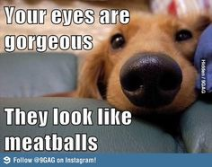Similar to the comment my husband makes that the dogs think I look like a pork chop.