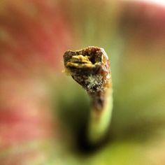 #olloclip #macro #apple stem